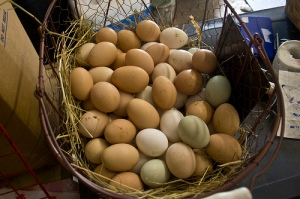 One basket, different eggs.